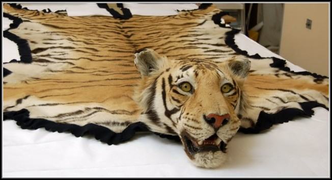 Real Tiger Skin Rug