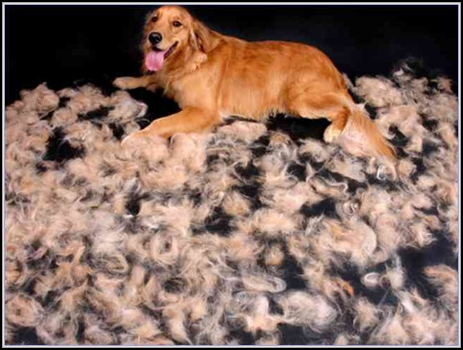 Short Hair Dog Shedding In Winter