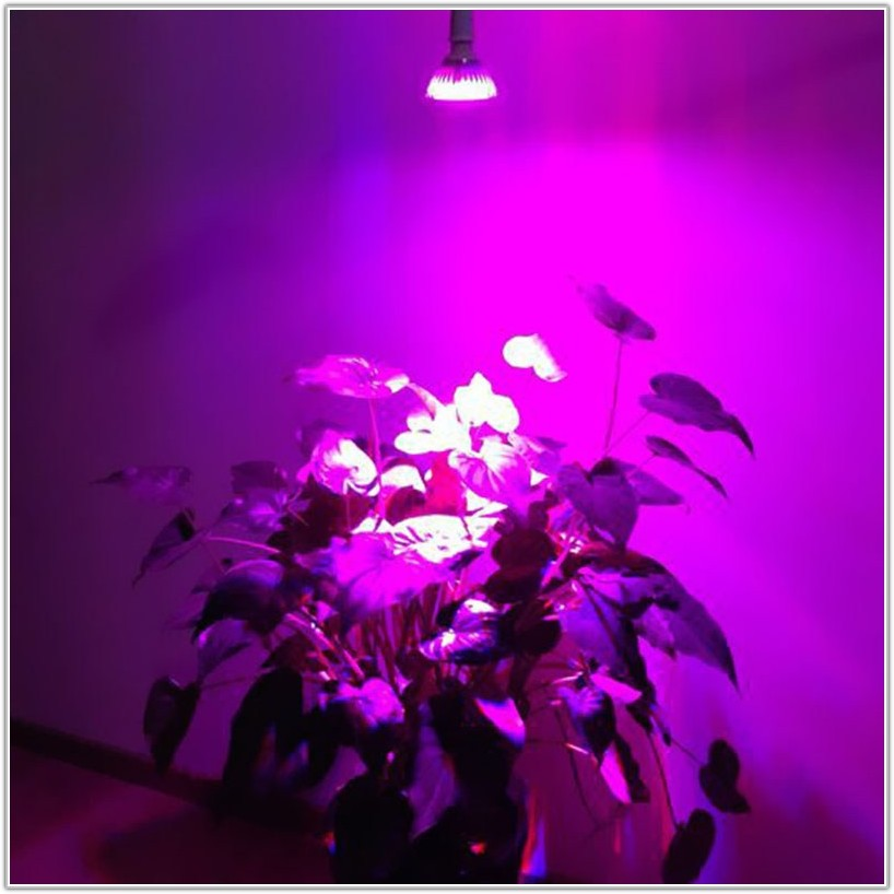Artificial Lighting For Indoor Plants