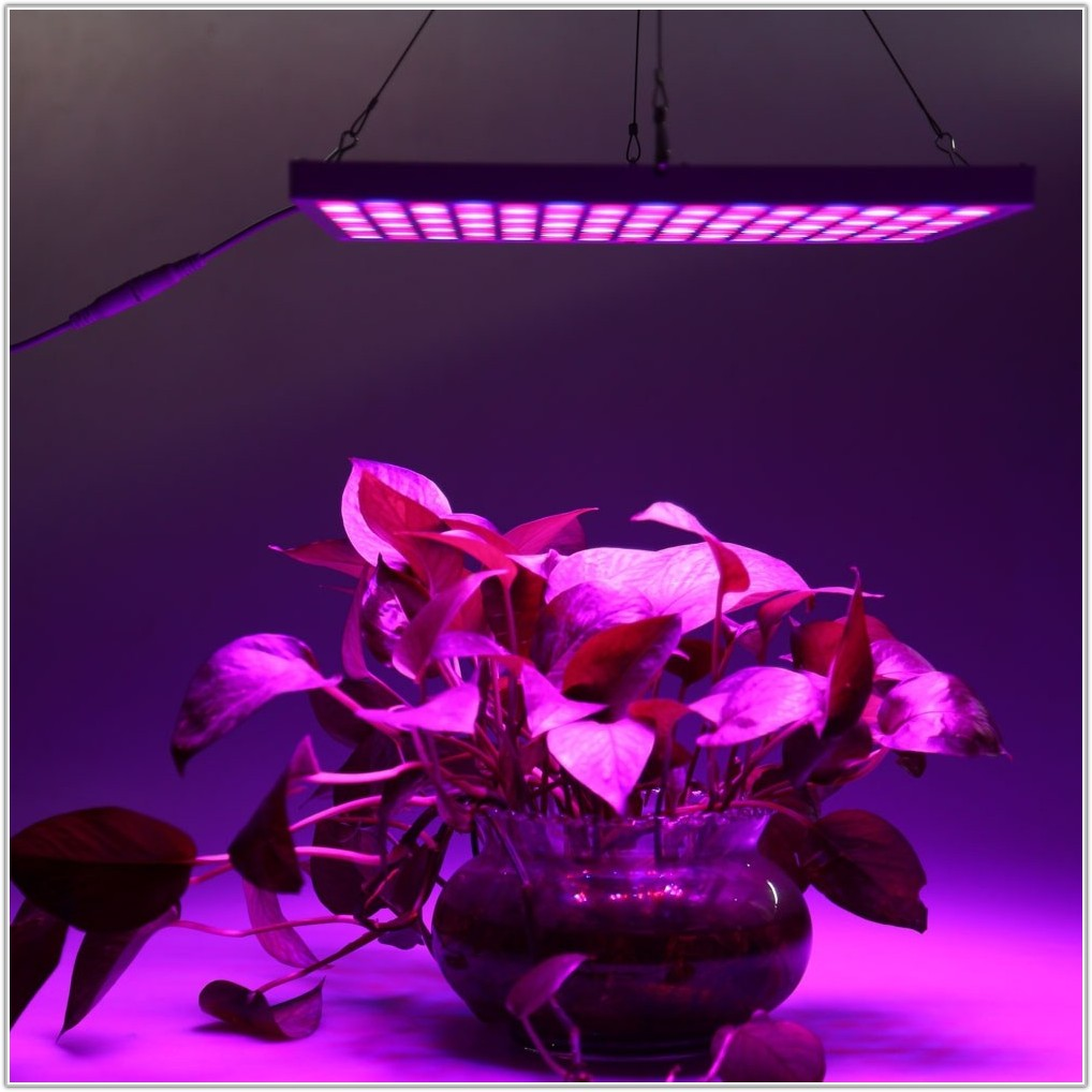 Heat Lamp For Indoor Plants