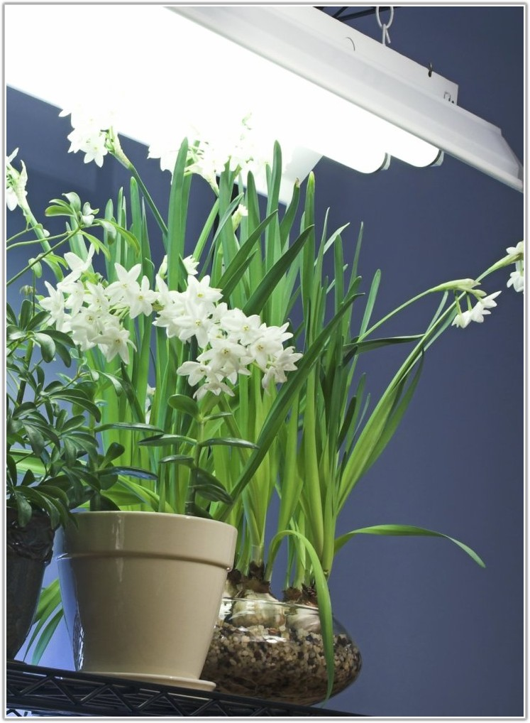 Light Bulbs For Indoor Plants