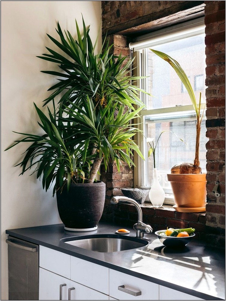 Decorating Ideas For Kitchen Countertops With Plants