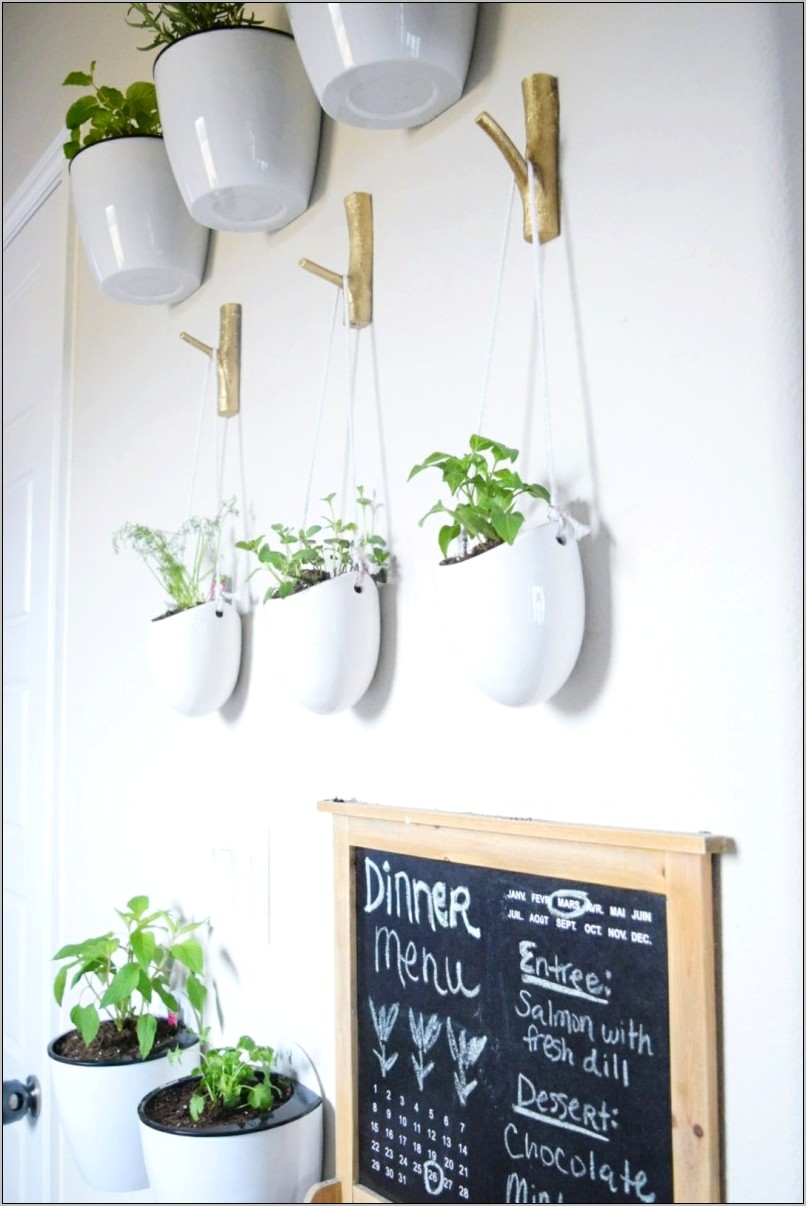 Decorative Plants For Over Kitchen Plants
