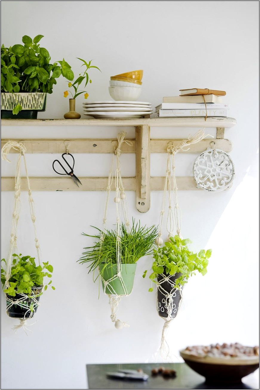 Hanging Plants Kitchen Decor