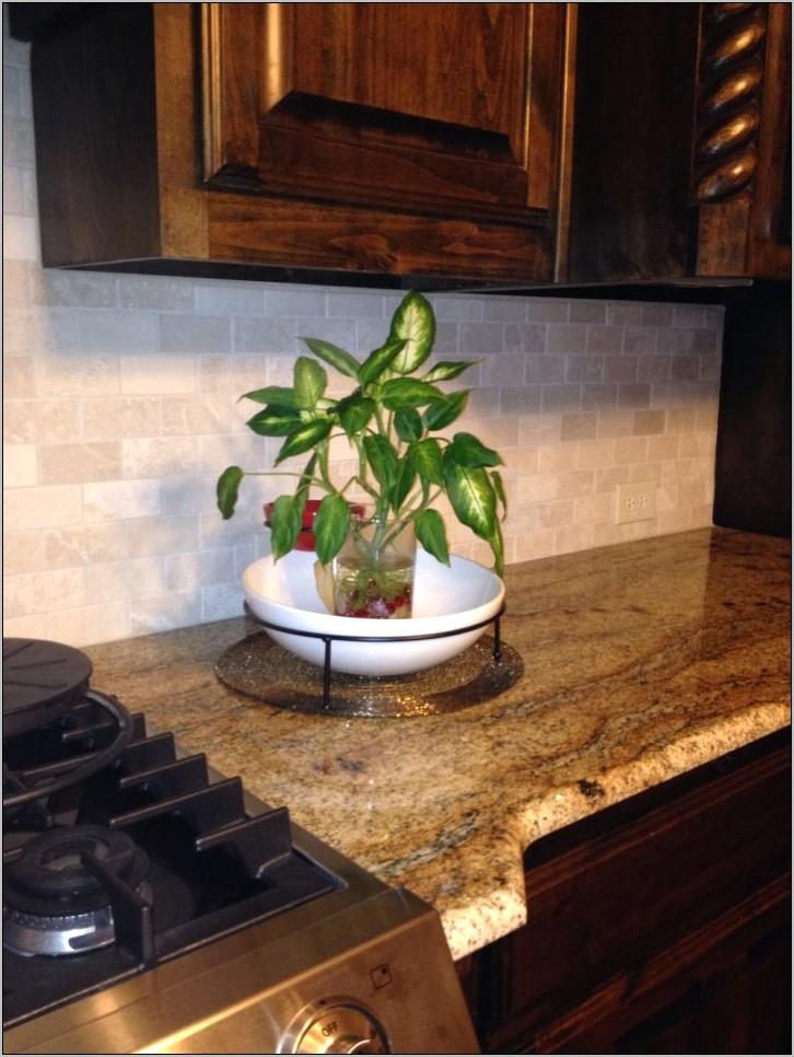 Plant Decoration In Kitchen