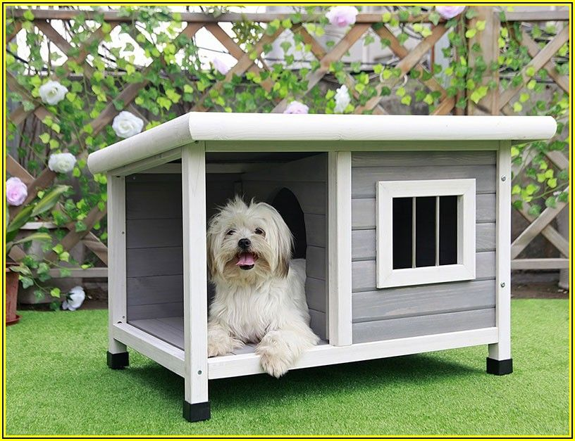 Dog House With Patio Nz