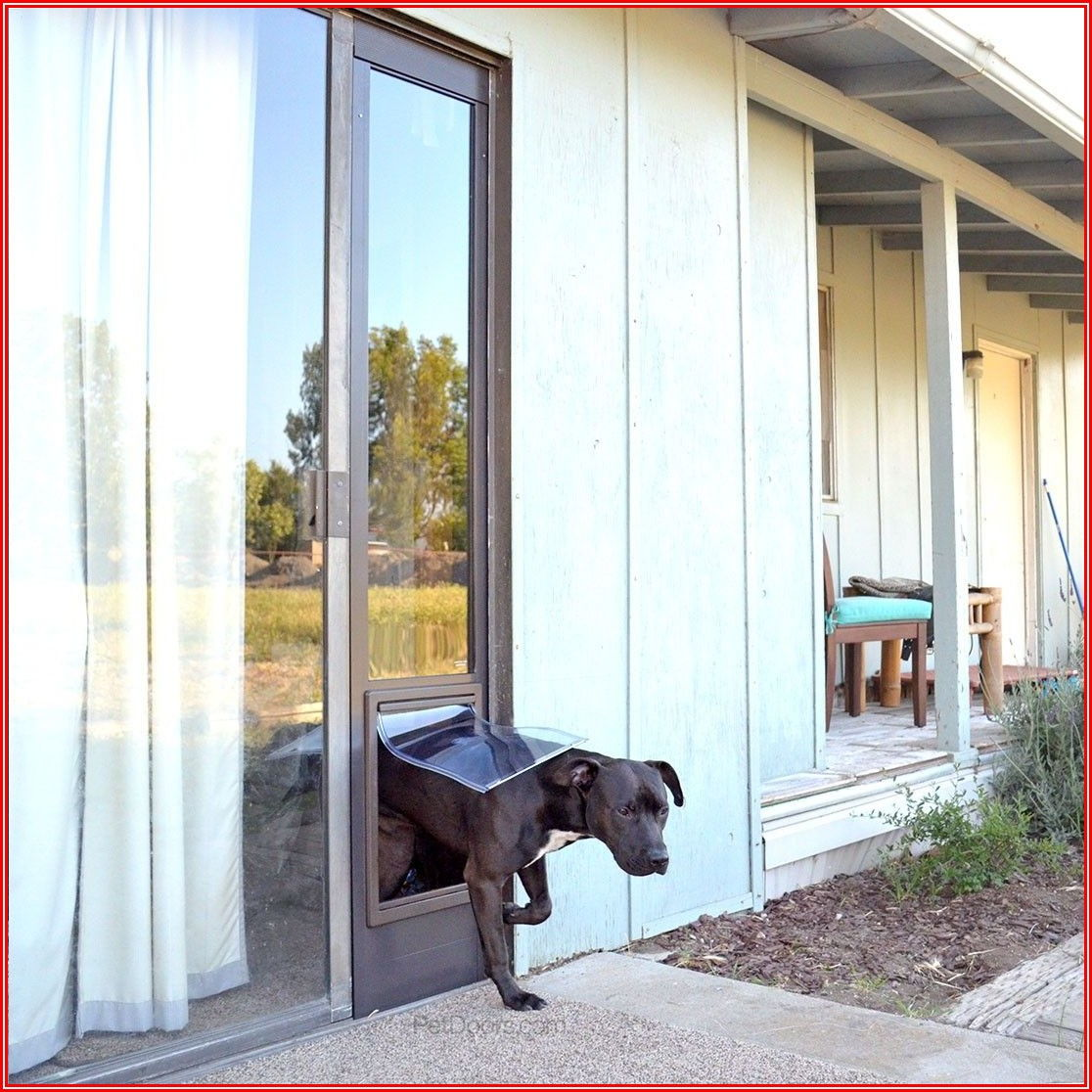 Single Patio Door With Dog Door