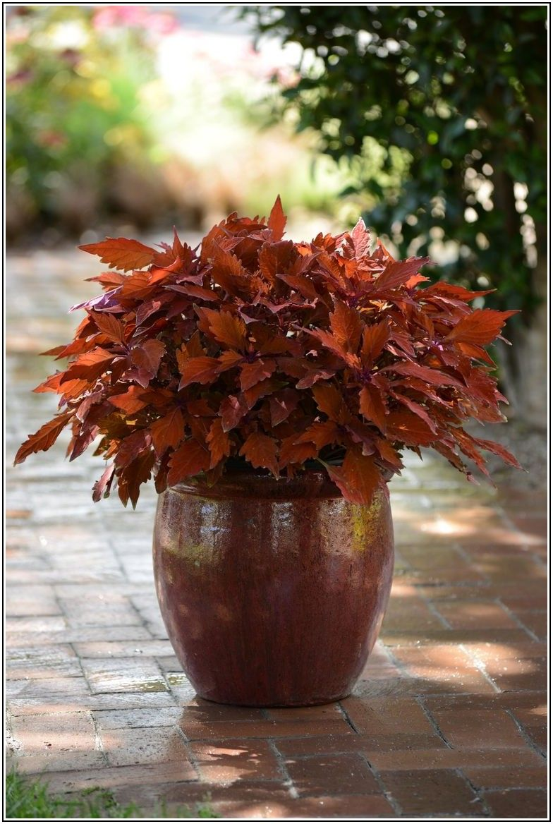 Best Outdoor Patio Plants