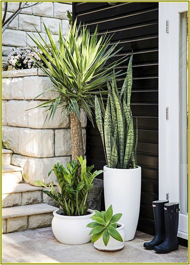 Best Plants For Outdoor Patio Pots