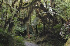 Mossy Tree in the Rainforest