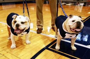 Butler Blue II and III on court-001