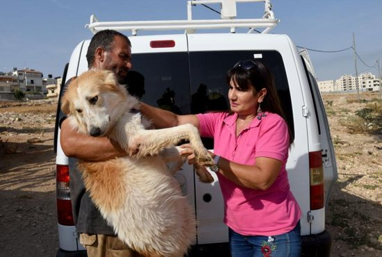 Diana Babish pets a dog being held by Younis Jubran Oct. 3 outside Babish's animal shelter in Beit Sahour, West Bank.