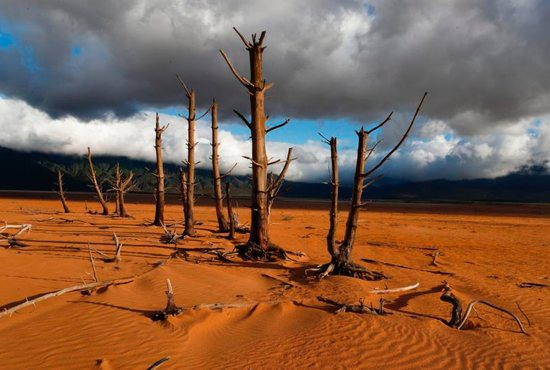 Barren trees stand in the critically low Theewaterskloof Dam in late January in Villiersdorp, South Africa. Catholic organizations in 2018 called for greater personal responsibility in tackling climate change.