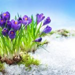 What my crocuses know about Easter