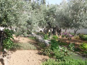 MountOlives Garden of Gesemme