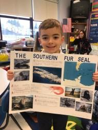 Lorenzo Cardi with his Southern fur seal.