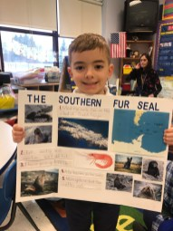 Lorenzo - IC School kindergartners spotlight Arctic, Antarctic animals