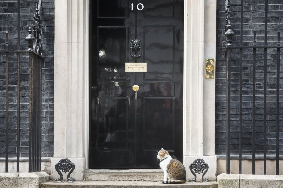 Seekor kucing kucing lucu duduk di teras depan