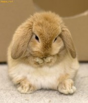 3806-cute-rabbit-animals-funny-pictures-funiacscom
