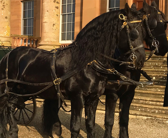 The Cavalry of Heroes - Teaching Horse to Drive in Harness, Herefordshire and Wales