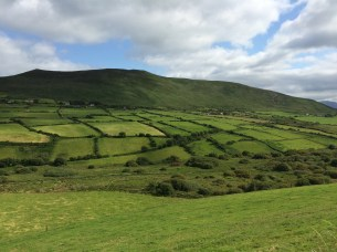 Farmland on the Dingle Peninsula