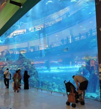 462 aquarium