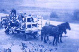 horsedrawn hayride