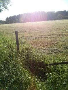 Dutch countryside near our farm