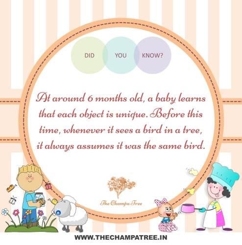 Did You Know Facts - 6 months old baby