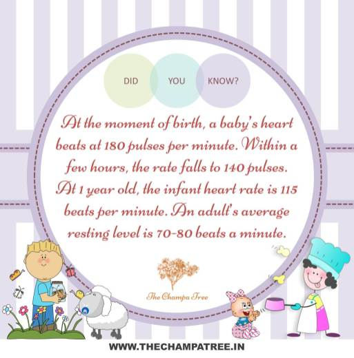 Baby's heart beat
