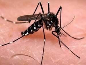 Mosquito Repellent 02