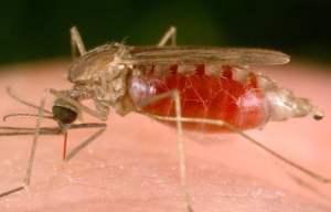 Mosquito Repellent 06