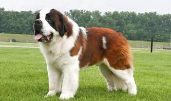best dogs for kids 10