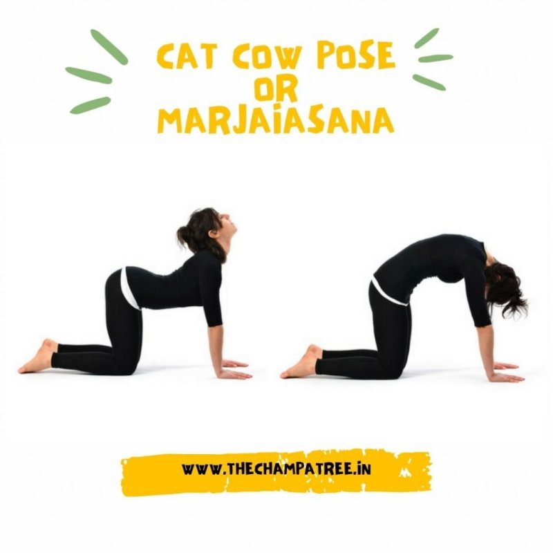 Yoga for women  - Cat Cow Pose