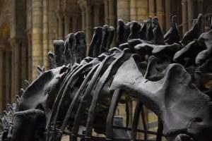 Goofing off is fieldwork for artists. Image of dinosaur skeleton in museum.