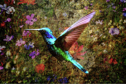 """Christy's post troll artwork: """"Hummingbird,"""" new digital art by Christy2018. Used with permission of the artist."""