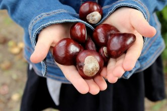 palm full of beautiful chestnuts representing letters in our feel good file