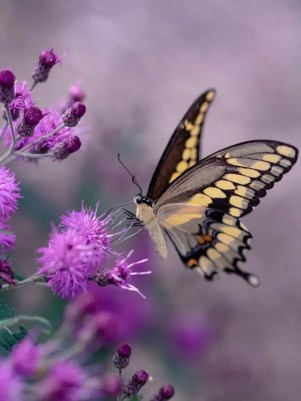 butterfly on bush, for art newsletter attraction post
