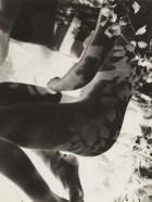 László Moholy-Nagy Nude, 1929