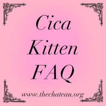 Cica Kitten FAQ – What is a Cica Kitten? post thumbnail