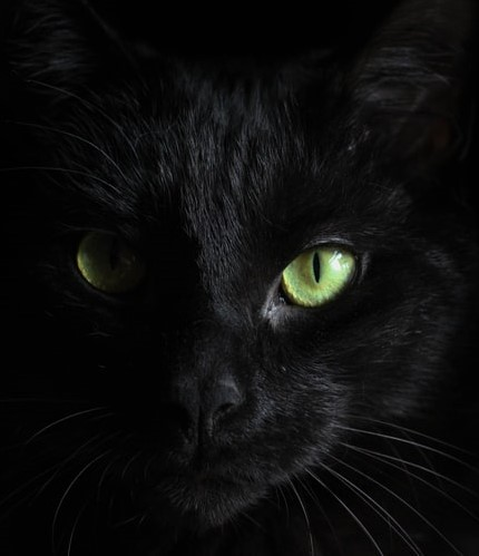 Why Are Black Cats Unlucky? post thumbnail
