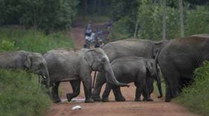 Chhattisgarh: Congress govt faces dissent from its own over elephant reserve plan