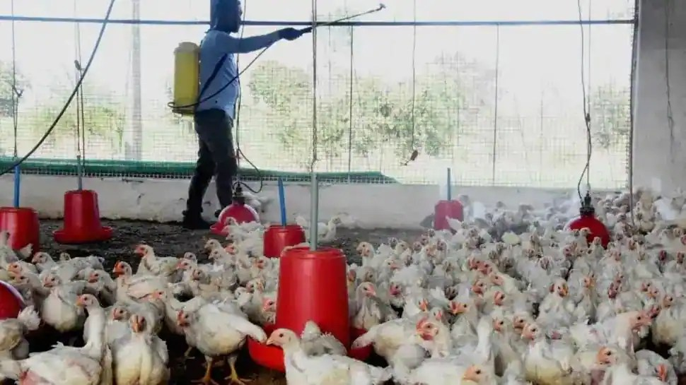 India reports its first bird flu death of 2021