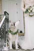 wedding-Husky-in-Winter-Wedding-600x900