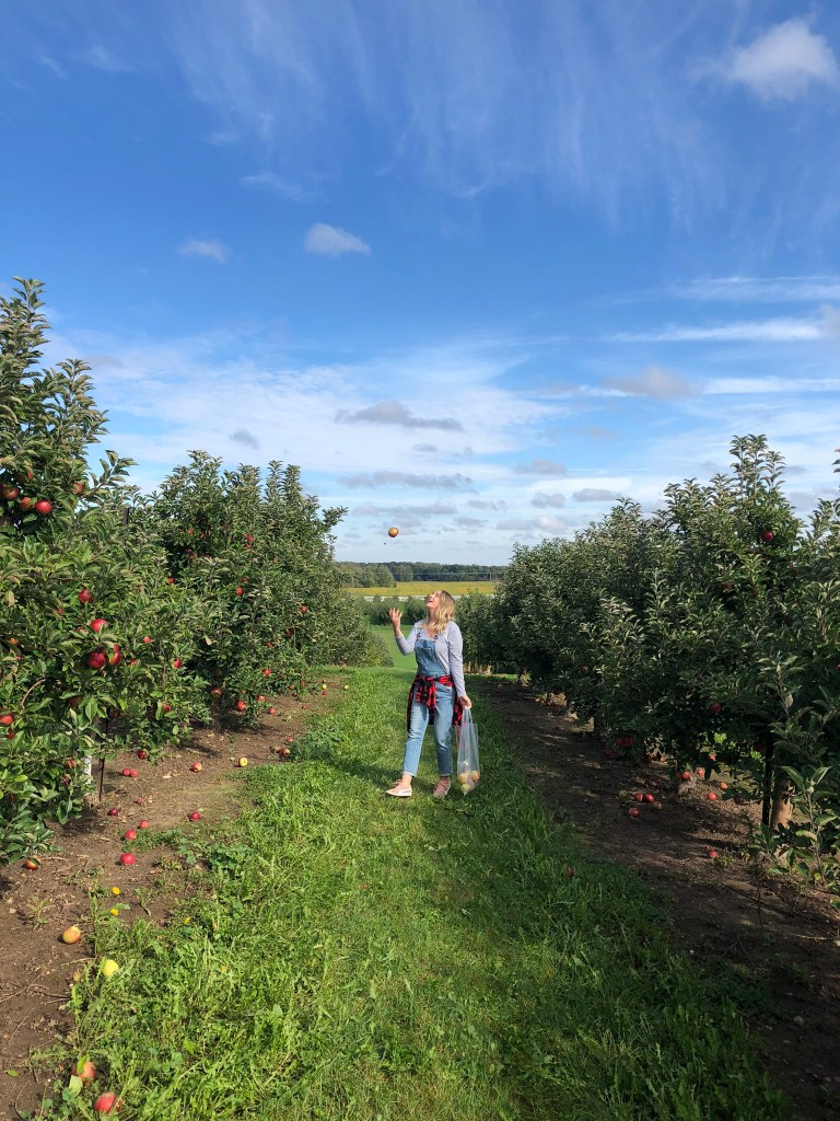 Apple picking at Cranes orchard in Fennville, Michigan. It's one of our favorite orchards!