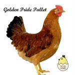 Golden Pride