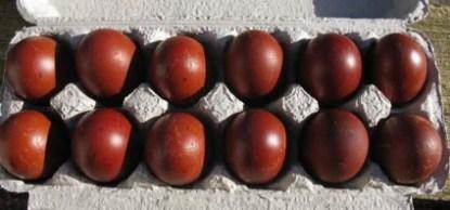 Sex-Link Copper Maran Eggs