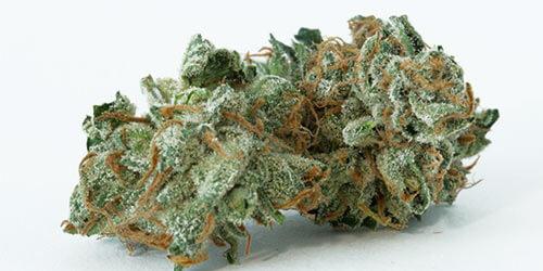 Image result for Jesus Shark weed strain