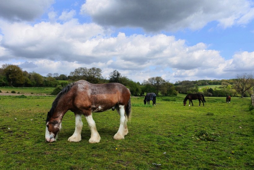 Horses graze in the Chess Valley