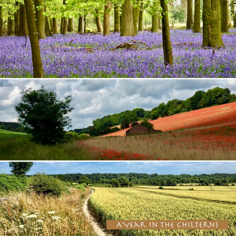 Three images of the Chiltern Hills through the seasons.